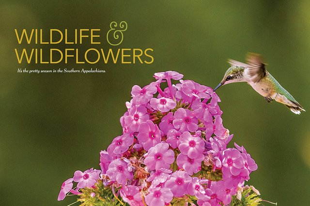 WildlifeAndWilfeflowers.jpg
