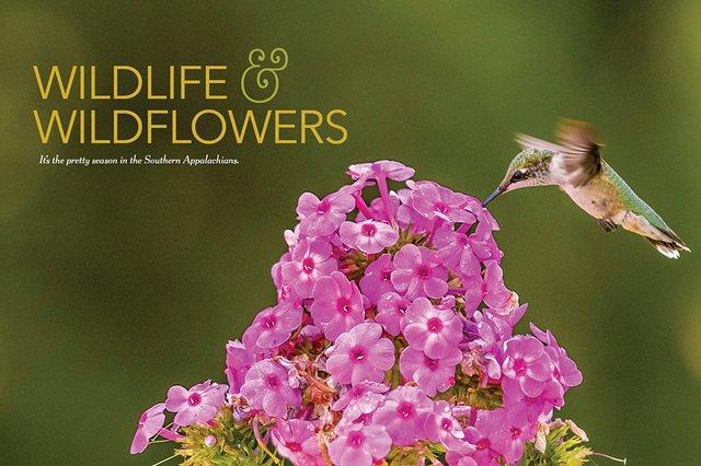 WildlifeAndWilfeflowers.jpg