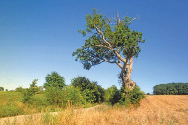#36. The Stonewall Jackson Prayer Oak