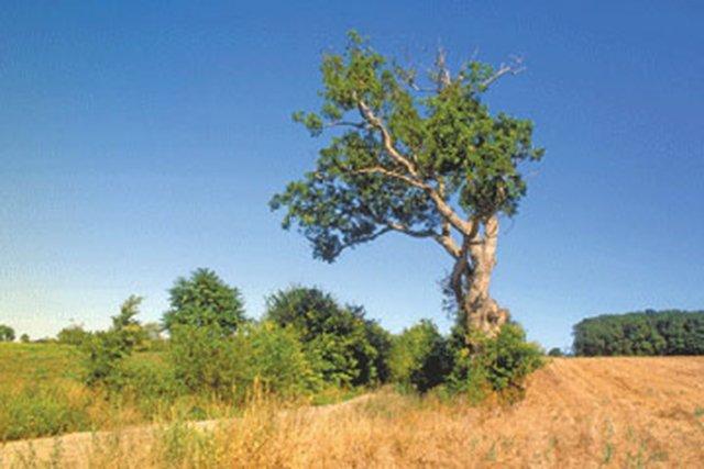 #36. The Stonewall Jackson Prayer Oak