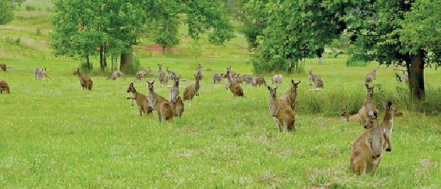 #7. The Kangaroo Conservation Center.