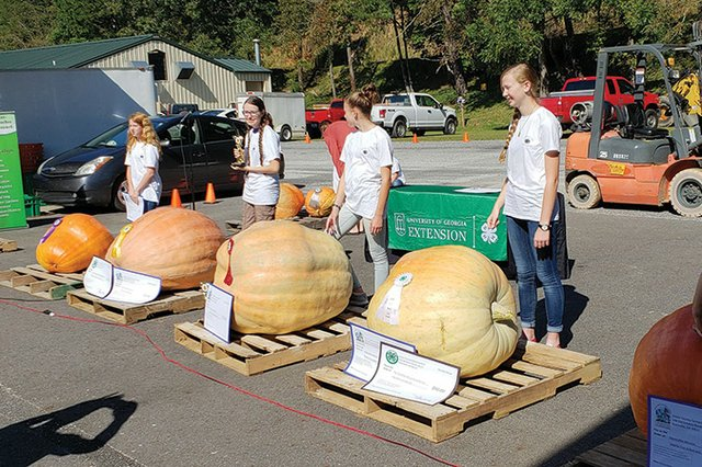 Farmers-Market-Biggest-Pumpkin-Contest.jpg