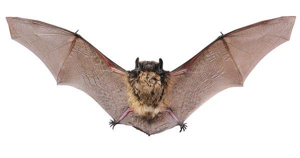 Creature-Bat.jpg