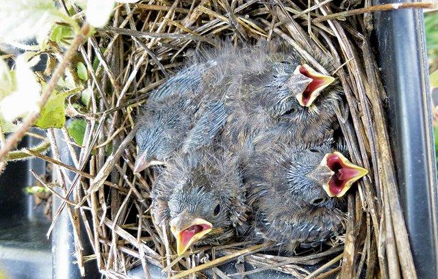 Baby-Birds.jpg