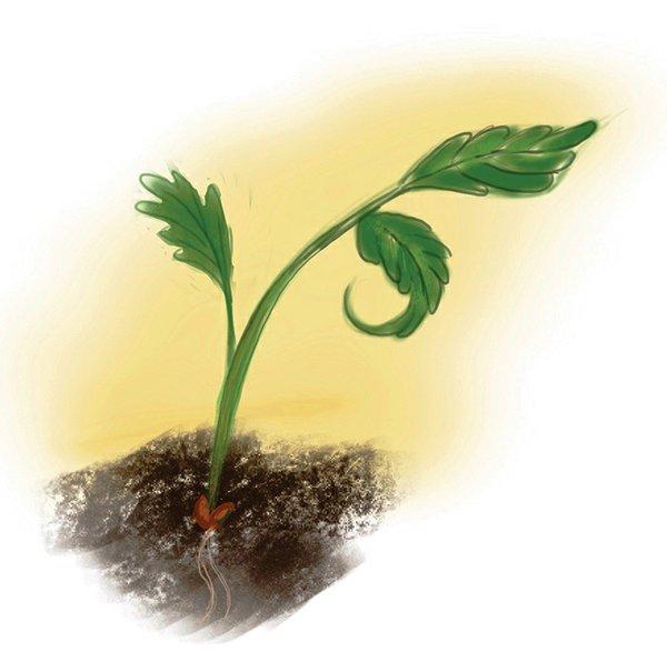 7-2020-seed (1).jpg