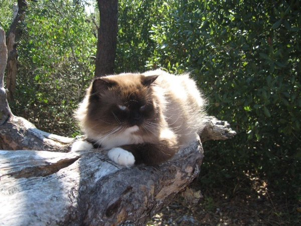 Harry the Hiking Cat