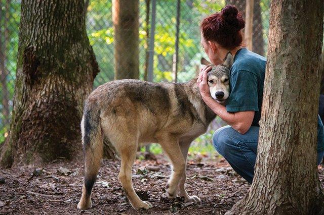 Wolf-Puppies-20140803-246.jpg