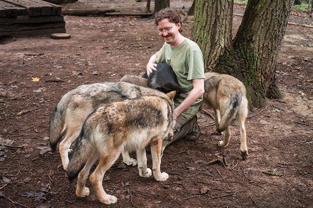 Wolf-Puppies-20140811-100.jpg