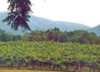 Mountains and Merlots
