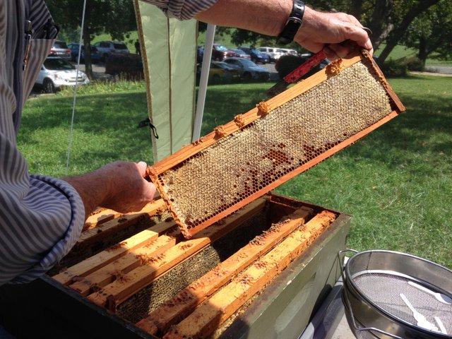 SK Beekeeping park staff.jpg