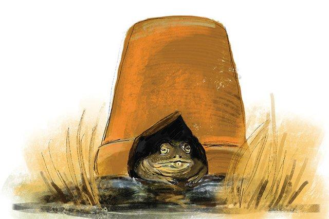 3-toad.jpg