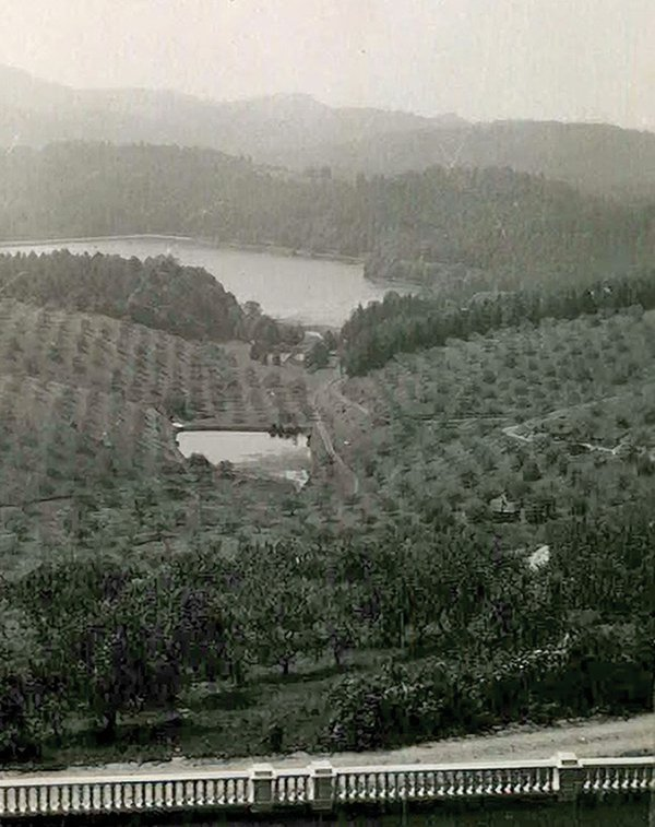 cone-orchard-nps.jpg