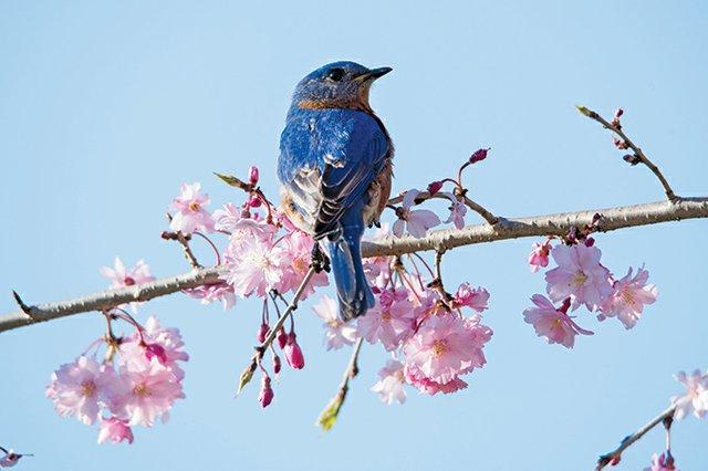bluebird041019-3.jpg