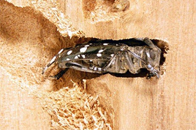 beetle2-TB.jpg