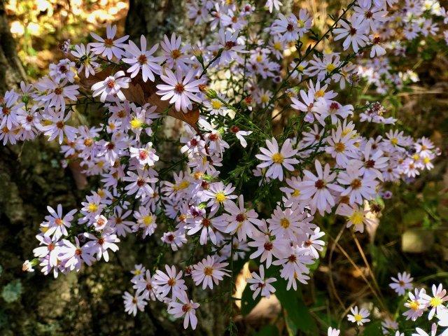 SK Summer Blooms.jpg