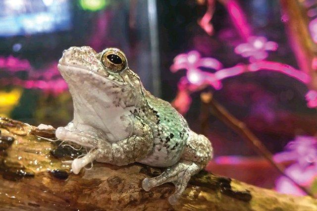 frog3.jpg