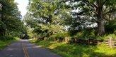BlueRidgeParkway.DERotenizer,July2021-(1).jpg