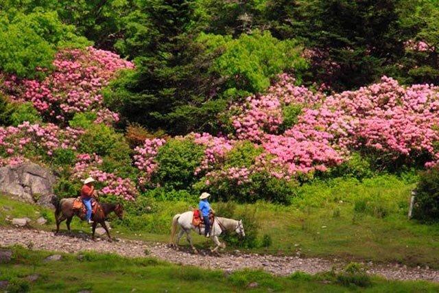 Virginia's Rhododendron Gap