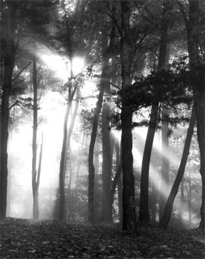 phoca_thumb_l_fog-trees-new-river.jpg