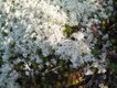 Reindeer Lichen and Moss